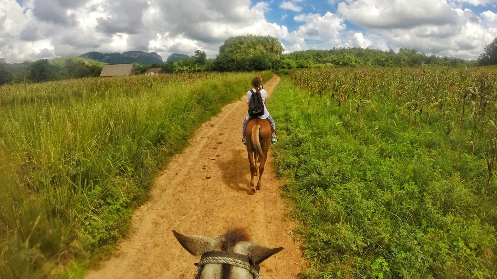 Horse riding tour through fields and tobacco plantations