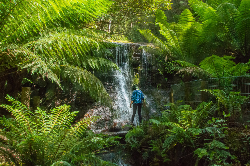 Tasmania fresh waterfalls and rainforest