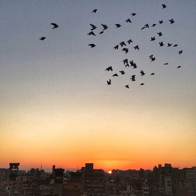 Visiting a pigeon house on a roof top in Port Said as one of the owners flocks returns home at sunset. Owners compete to have the strongest flocks and attract birds from other pigeon houses.