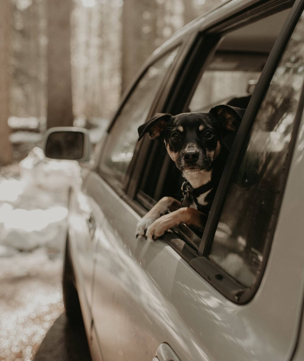Do A Test Drive - If this is your first road trip with your pups help them get used to being in the car by going on short drives together. If they haven't barfed, gradually add on some miles, always praising them for being such good adventure buddies. If they pant or whine from being so excited for the new places they get to check out, pick up some all-natural calming treats. There are also all-natural remedies for car sickness if your fur babies can't hold down their breakfast.