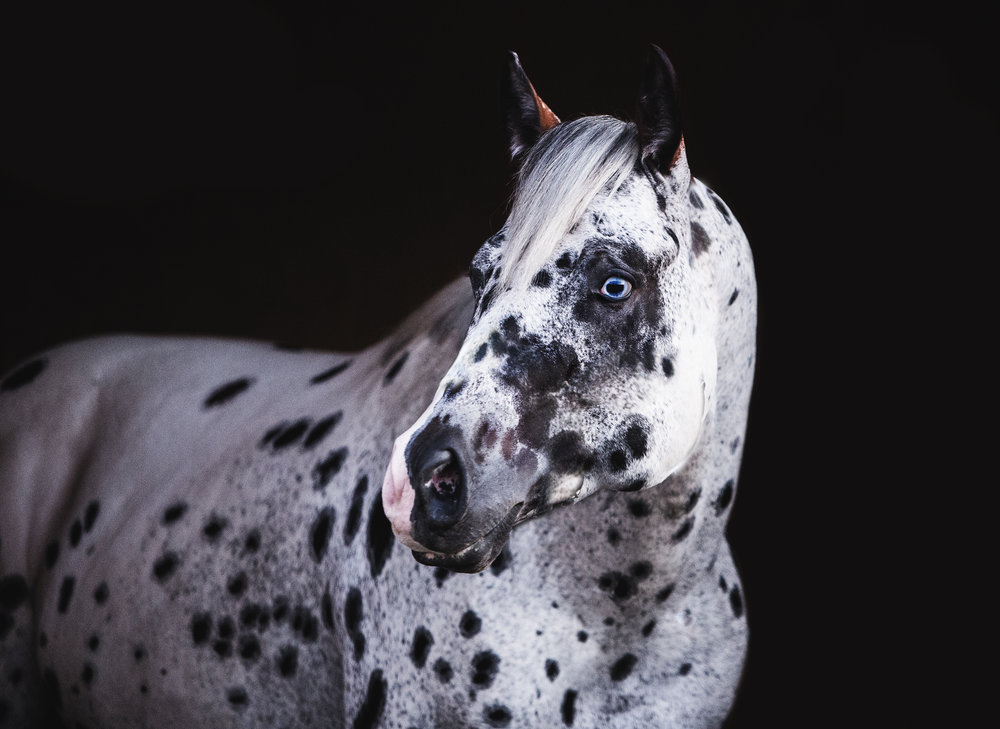 Equine Collections -