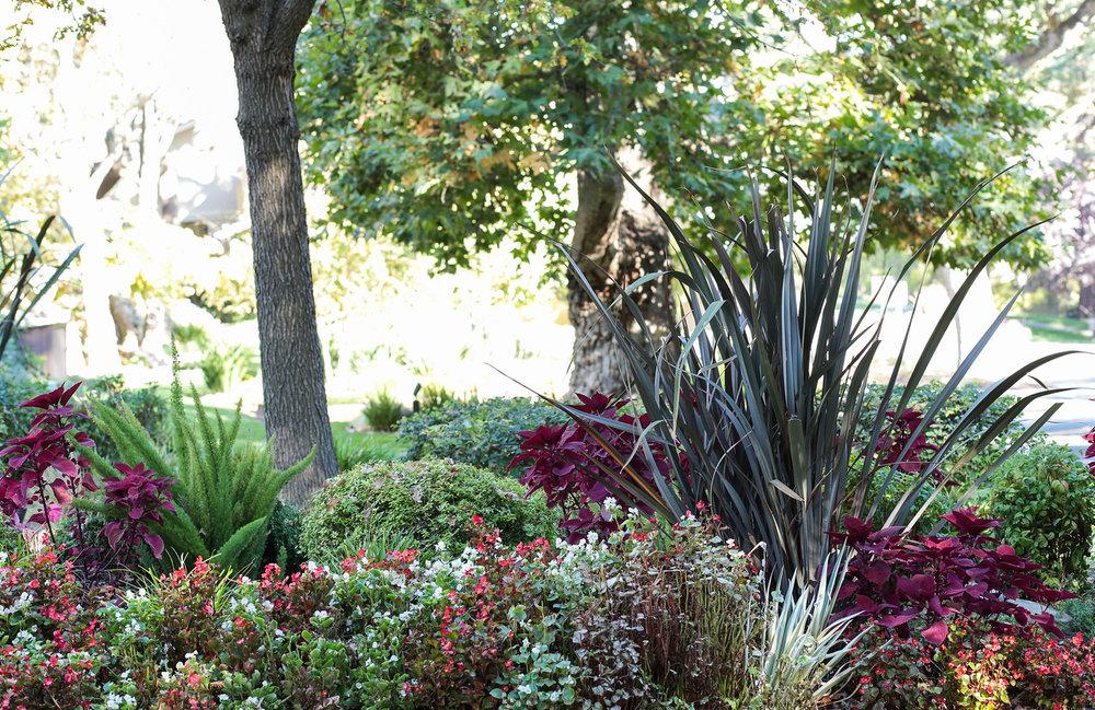 14672 Fieldstone Dr Saratoga Blu Skye Media-0478-X2.jpg