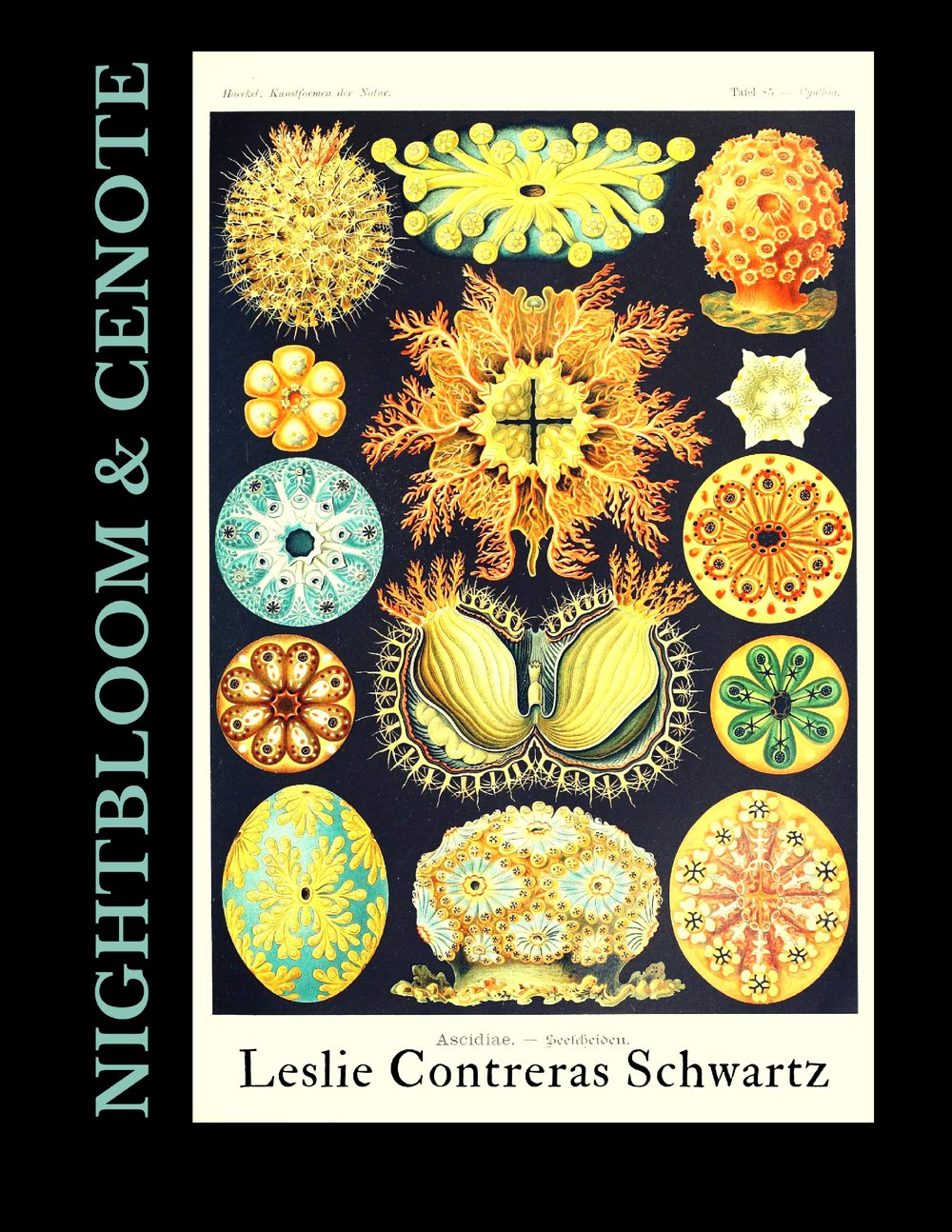 Coming Spring 2018  - In Nightbloom & Cenote Leslie Contreras Schwartz traverses a nighttime landscape with eyes purposefully wide open. She descends into