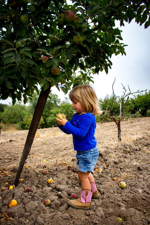 apple picking-3.jpg