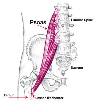 Psoas-Anotomical-diagram.jpg