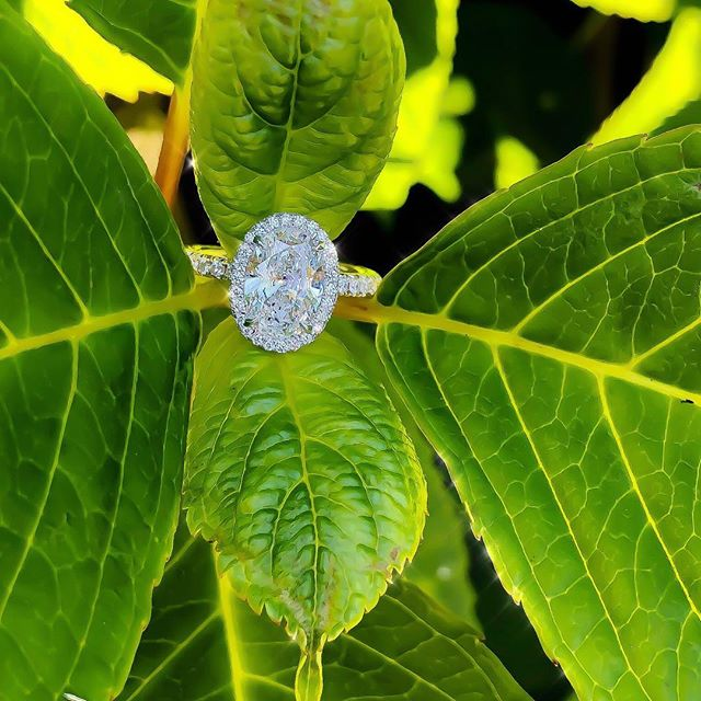 Dreaming of warmer weather 🥶🙇🏻‍♂️...and about ten more of these pretty ovals! ✨😍💎✨ • • • #Shesaidyes #Love #Proposal #Oval #Beauty #Design #Style #Engaged #Bespoke #Instarings #GIA #Diamondring #Bridal #She_saidyes #Thecaratclub #Theknotrings #Gemhuntrings #Vibesjewelery #Finejewelry #Elegance #Privatejeweler #Wholesale #Highend #Luxury #Picoftheday #Fire #Bling #Brilliance #NYC #ASDgems