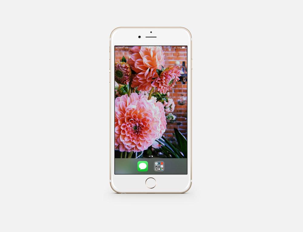 YAHC-phone-mockup.jpg