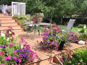 Patio Annuals