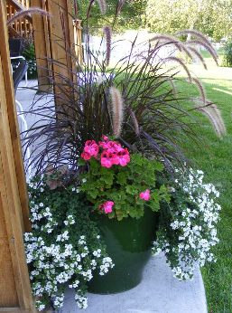 Rubrum Purple Fountain Grass, Bacopa, Aristo Clarina Regal Geranium, Caladium.JPG