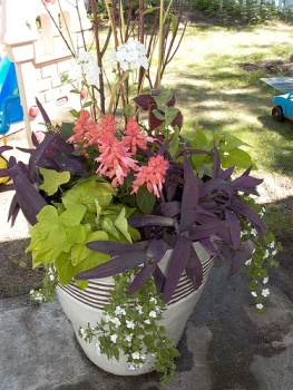 Phlox, honeywort, potato vine, moses in a boat, salvia, bacopa.jpg