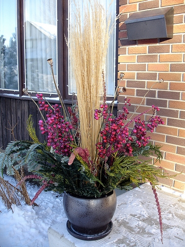 Karl Foerster grass, Fir and Cedar Evergreens, Oriental Poppy seed heads, dried Love Lies Bleeding flower tassels, artificial cranberries