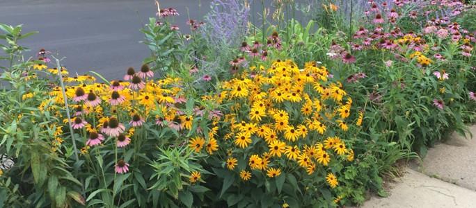 Perennial Garden by Midwest Gardening.jpg