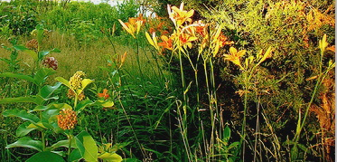 Drought-tolerant-garden-by-Karen-Cox.jpg