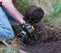 Planting-Spruce.jpg