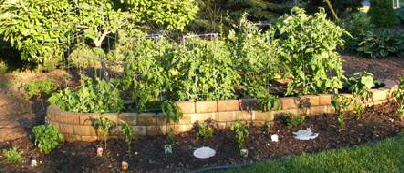 Edibles-garden.jpg