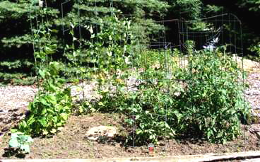 Start-a-Vegetable-Garden by Midwest Gardening.jpg