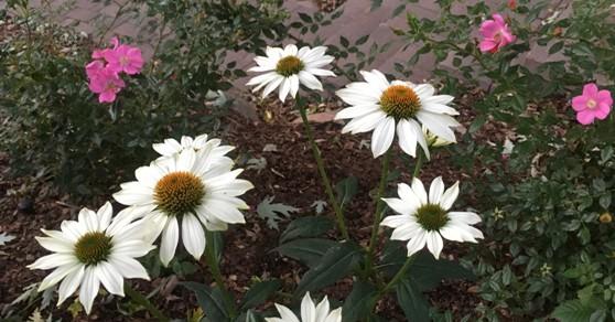 Perennials by Midwest Gardening.jpg