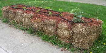 Straw-Bale-Garden-by-Kirsten-Skiles.jpg