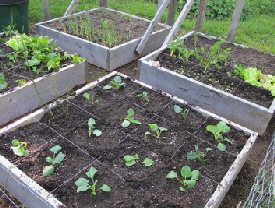 Square-Foot-Garden-by-Dale-Calder.jpg