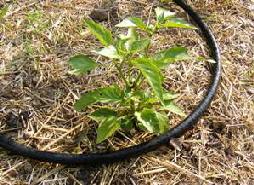 Soaker-Hose by Midwest Gardening.jpg