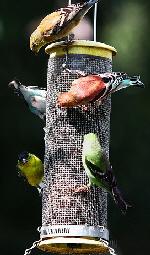 Birds-feeding-by-Rennell-Stowe.jpg