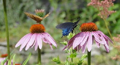 Butterfly-Garden-by-Cindy-Cornett-Seigle.jpg