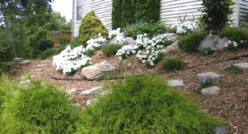 Genial Planting A Hill Or Slope By Midwest Gardening
