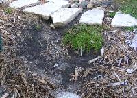 Runoff-Erosion by Midwest Gardening.jpg