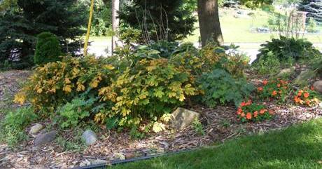 Shade-Garden-by Midwest Gardening.jpg