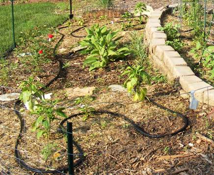 Water with Soaker Hose by Midwest Gardening.JPG