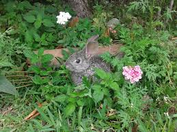 Rabbit in the Garden.png
