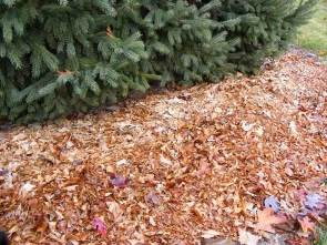 Mulch with shredded leaves by the ordinary gardener.jpg