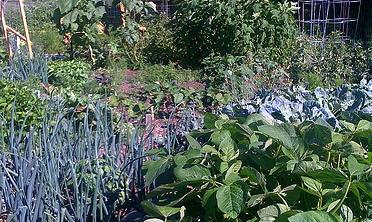 Organic-garden-by-s-shreeves.jpg