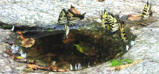 Butterfly-and-Insect-bath-by-Alisa-Ryan.jpg