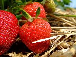 Strawberries-by-Martin-Fisch.jpg