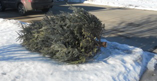 Recycle-xmas-tree by Midwest Gardening.jpg