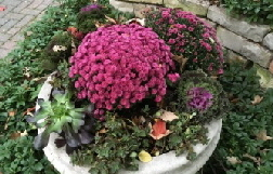Mums--Kale--Succulents-by-Midwest Gardening.jpg