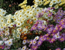 Fall-garden-by-orchidgalore.jpg
