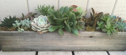 Succulent Container by Midwest Gardening.JPG