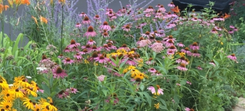 Native Perennial Garden.JPG