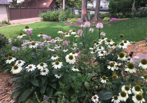 Once barren backyard - My mostly sunny backyard is perfect for gardens.