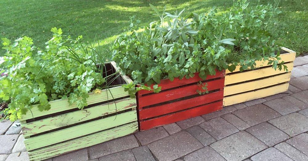 Container+Garden.jpg