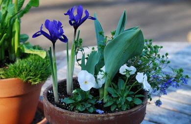 Midwest Gardening & Midwest Gardening \u2014 Best Perennials for Container Gardens