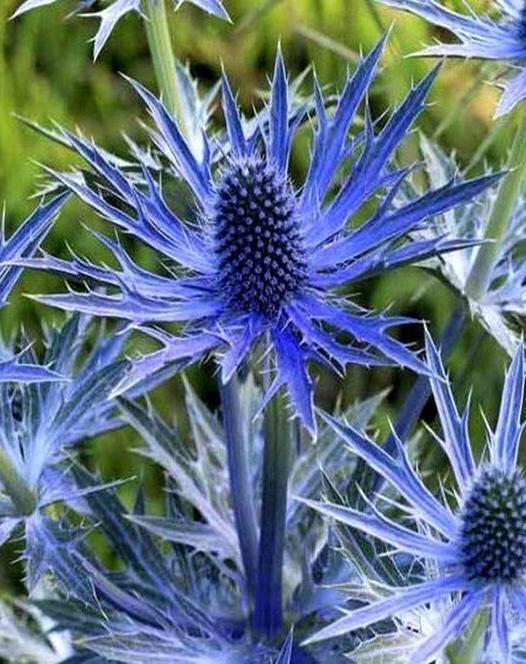 'Big Blue'.png