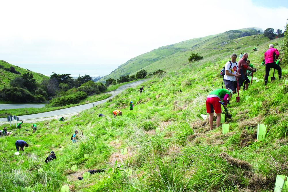 Evans Pass Restoration Planting13.JPG