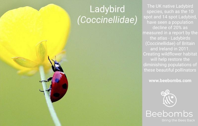 Female Long Horned Bee