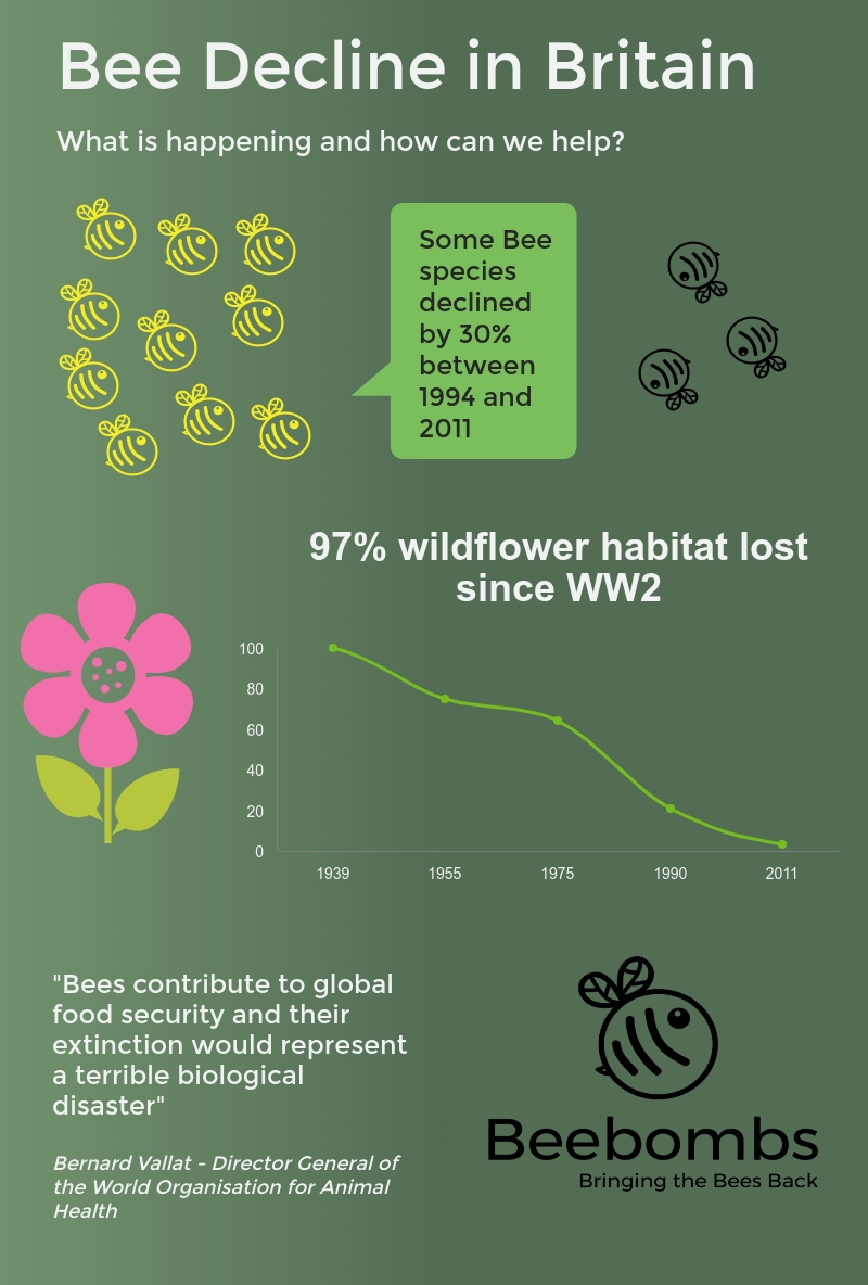 Bee decline and how we can help.jpg