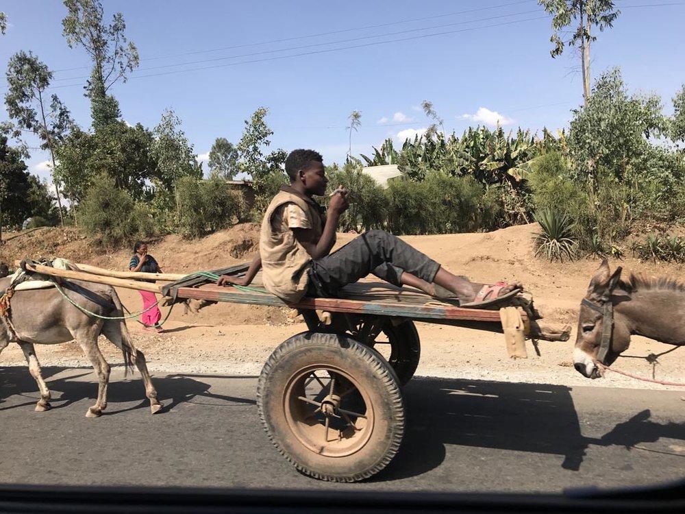 Det vanligste transportmiddelet i Etiopia