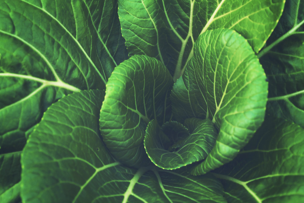 green horticulture.jpeg