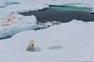 2012DV-Arctic-1946.jpg
